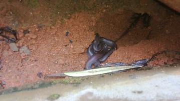 Little snake under a cardboad...