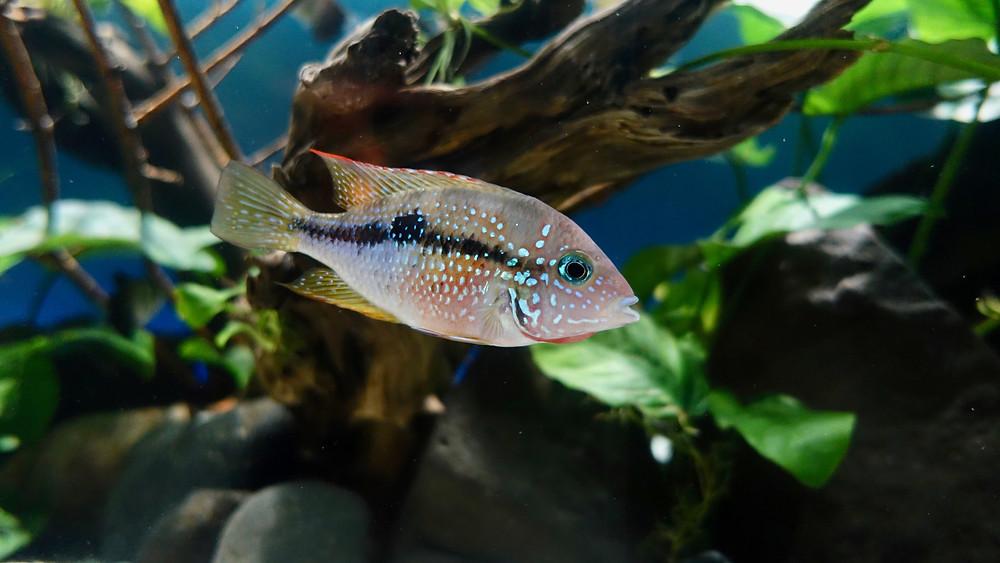 fish swimming in water
