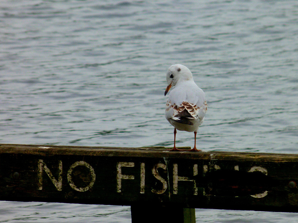 no fishing sign bird open water