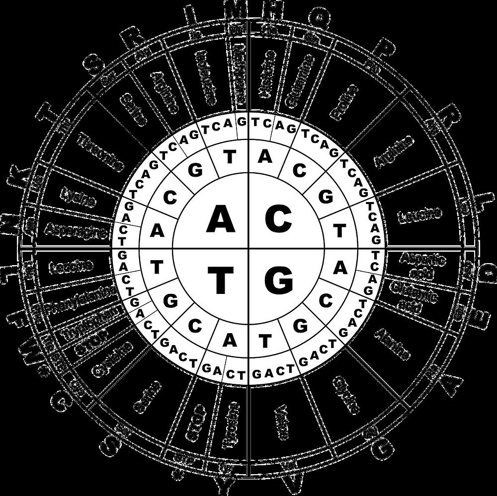 amino acid chart peptides should you use peptides