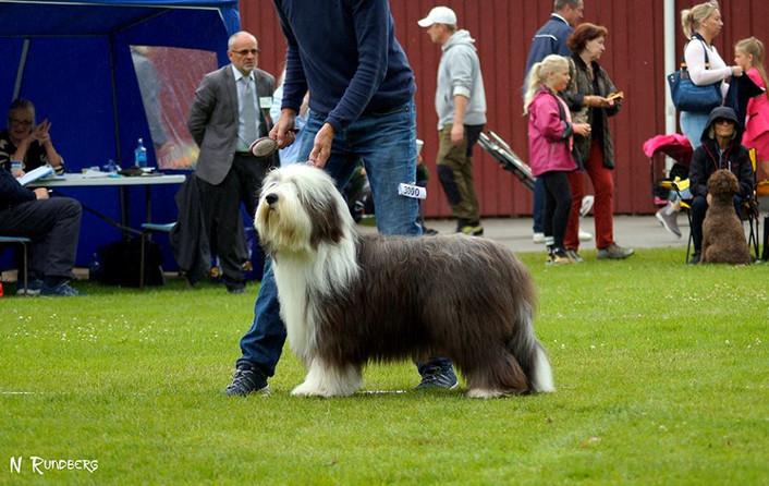 Hillbacka Addition 3ed best dog CC/CERT