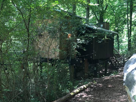 Timberline cares for the Treetop Hideaway Trees that hold Rental Tree Houses near Chattanooga!