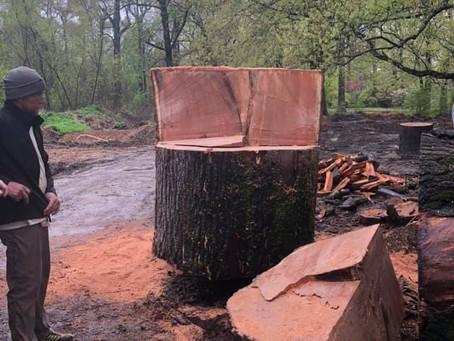 Memphis Botanic Gets A Throne