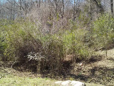 Treetop Hideaways in Chattanooga