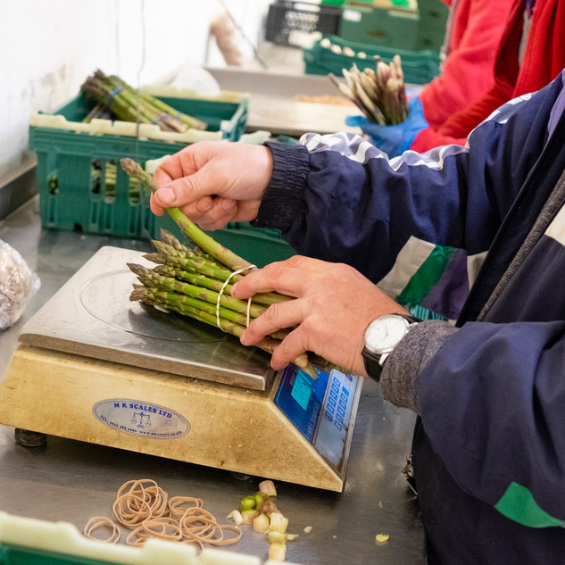 Asparagus Project Revised-7.jpg
