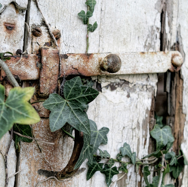 Latch and Ivy Colour.jpg