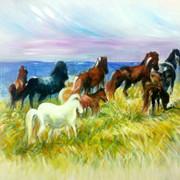 סוסים.jpg