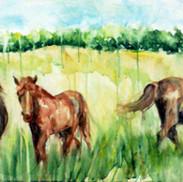 סוסים באחו.jpg