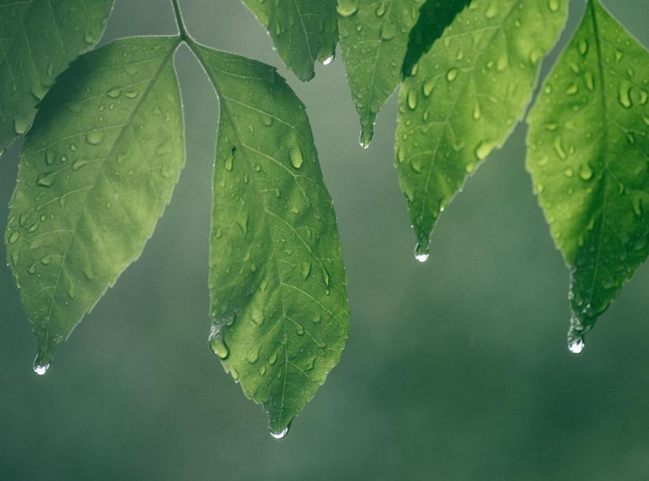 Tefillat Geshem: The Prayer for Rain