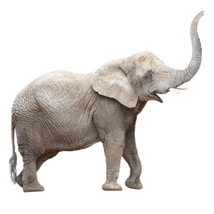 planning for small business is like eating an elephant