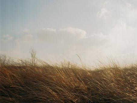 """calm breeze,"" Poetry by Caiti McGowan"