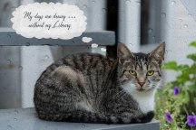 kitty thinks on cloth Rainy NEW1.jpg