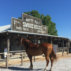 Horse at Hitching Post