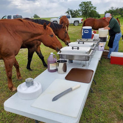 Catering Horses
