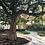Thumbnail: Giving tree