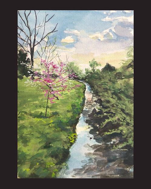 Spring at Kingfisher Creek