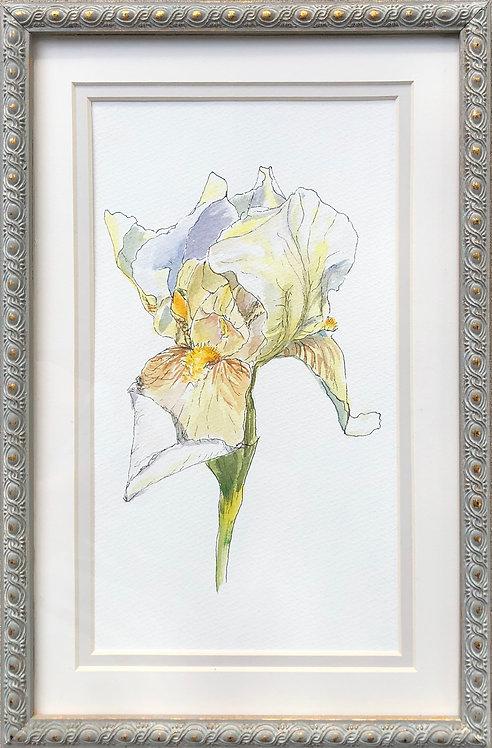 Hopeful Iris