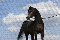 Sorvilo_Sultan Al Zobara_DB6U9765