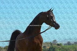 Sorvilo_Meteor_Arabco_DB6U3465