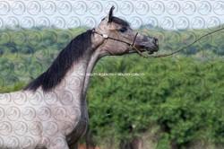 Sorvilo_TS Yasmin El Khidam_DB6U8325