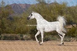 Sorvilo_Azzim_Al_Amaar_DB6U4051