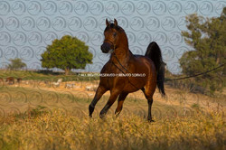 Sorvilo_Yparadise_DB6U9009