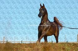 Sorvilo_TS_Prince_El_KHidam_DB6U5454