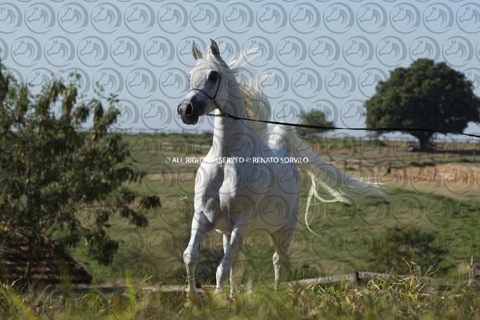 Sorvilo_Alma_LA_DB6U0148