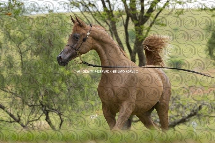 Sorvilo_TS_Prince_El_Khidam_DB6U0616