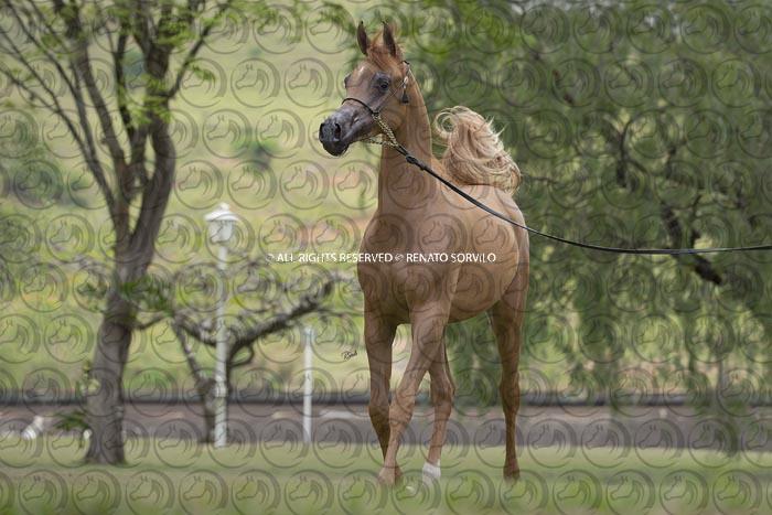 Sorvilo_TS_Prince_El-Khidam_DB6U0564
