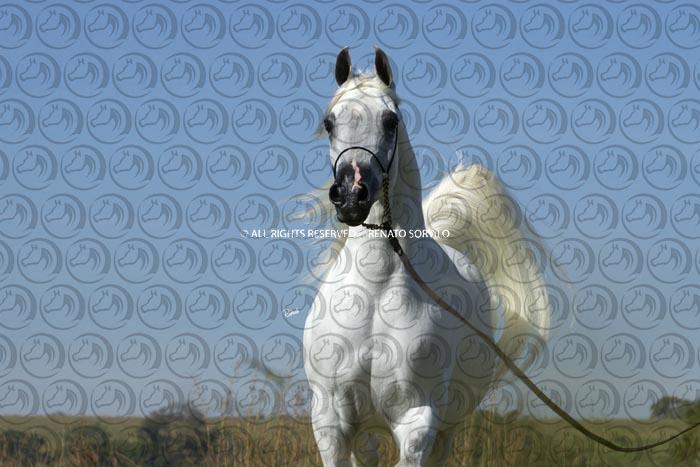 Sorvilo_Ylihandra_DB6U3589