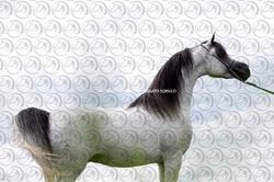 Sorvilo_FM Glory Of Marwan_DB6U9466