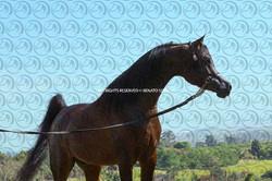 Sorvilo_Meteor_Arabco_DB6U3514