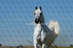 Sorvilo_YLIHANDRA PSCORE_DB6U3587