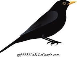 The blackbird's days