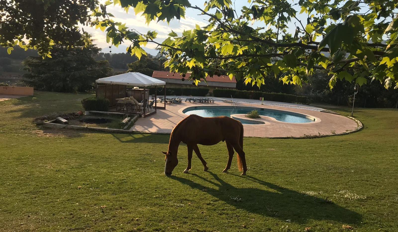 caballo, jardin, piscina.JPG