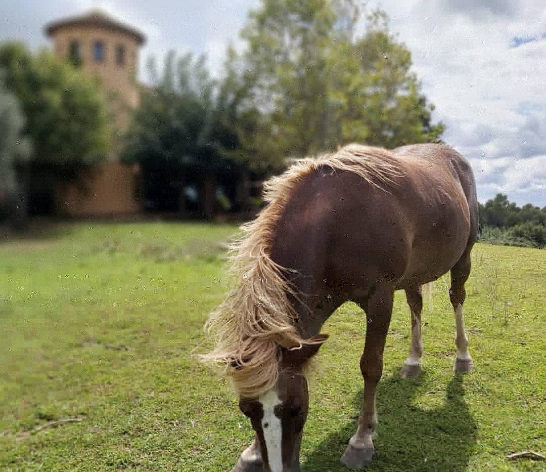 caballo, casa.jpg