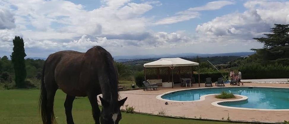 caballo, piscina.JPG