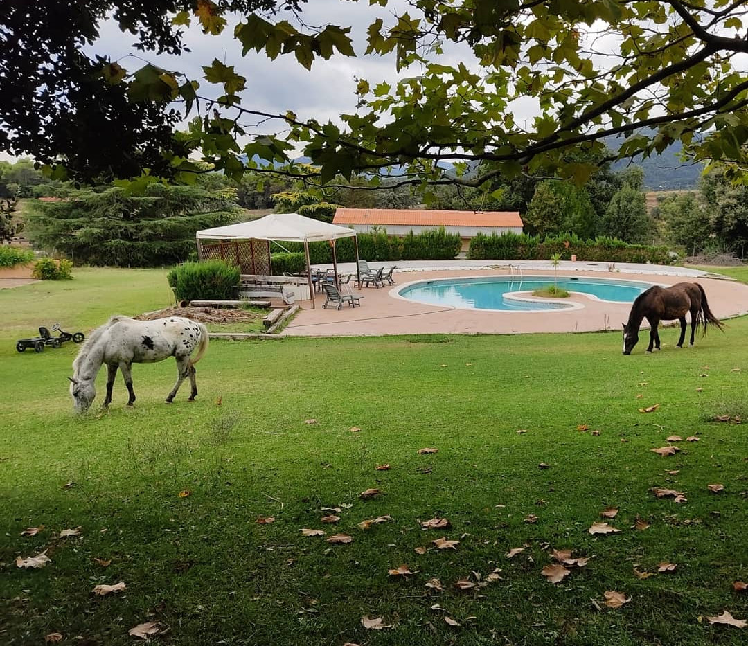 piscina, caballos.JPG