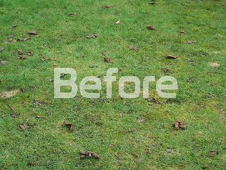lawn with piles of dog poop