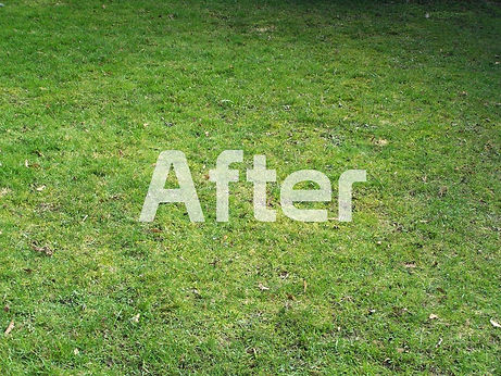 clean lawn after dog poop removed