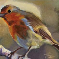 English Robin, 5x7, Oils on Linen