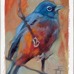 Autumn Blue Bird, 5x7, Oils on Linen