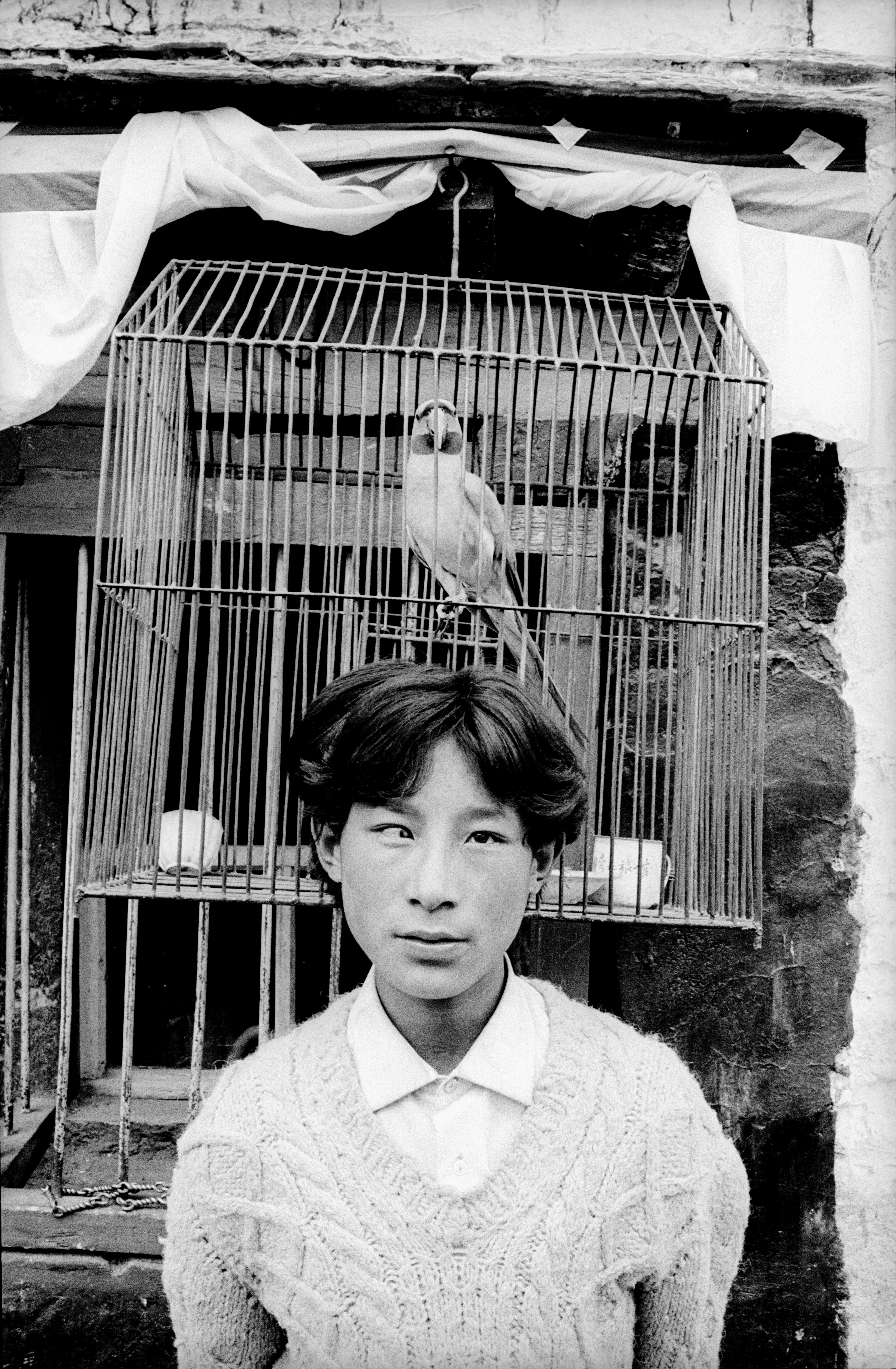papegøje1