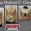 blusas oxford c. color girasol postal
