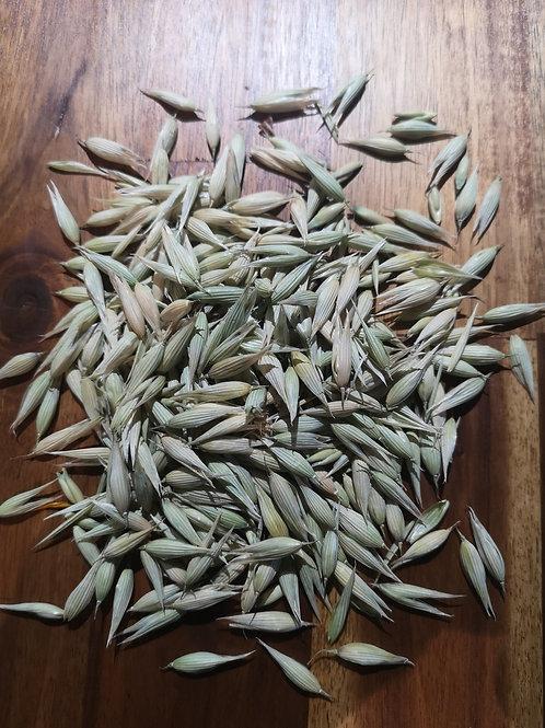 Milky Oats (dried) (1lb)