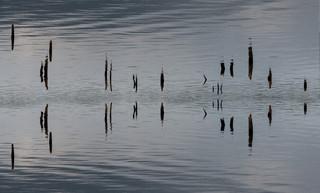 Water Haiku