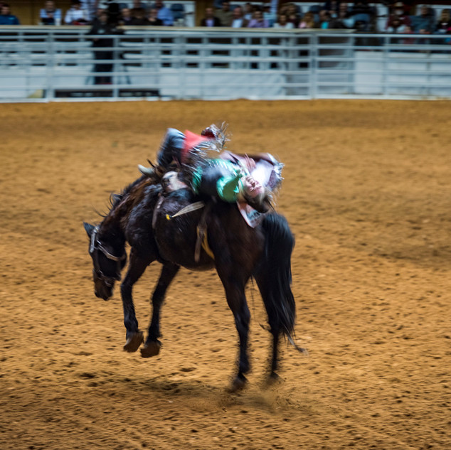 Ft Worth Rodeo