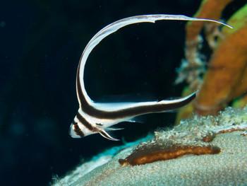 Linda McKean Underwater Photography