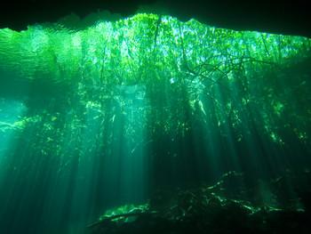 The Cenotes of Playa del Carmen with Yukatek Divers